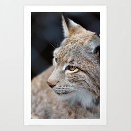 Young lynx close-up portrait Art Print