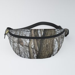 Barred Owl in the Woods by Reay of Light Fanny Pack