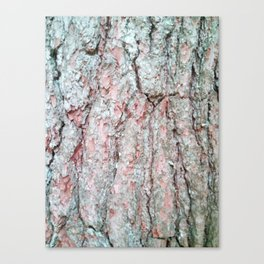 White pine bark. Canvas Print