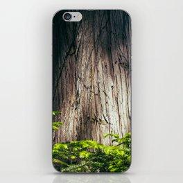Cedar iPhone Skin