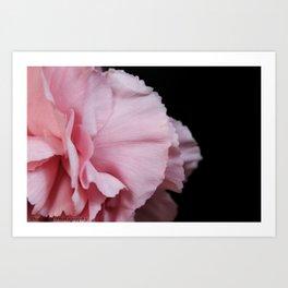 Carnation Petals Art Print