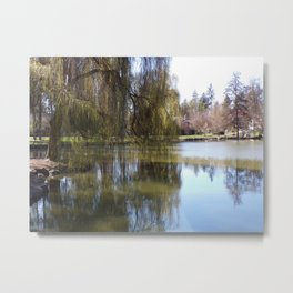 Old Weeping Willow Tree Standing Next To Pond Metal Print