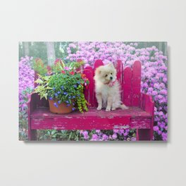 Sweet Little Dog on a Pink Park Bench Metal Print