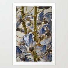 iced wisteria Art Print