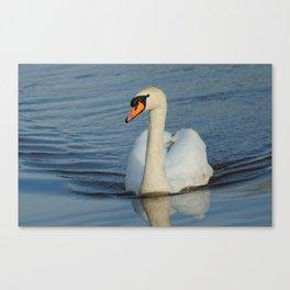 Elegant Mute Swan in the Harbor Canvas Print