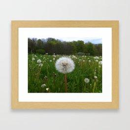 Flor:. Framed Art Print