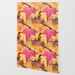 Autumn Still Wallpaper