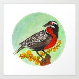 Loica bird Art Print