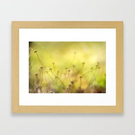 Looking for the sun Framed Art Print