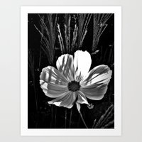 cosmos Art Prints featuring Cosmos by BavosiPhotoArt