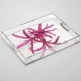 Nerine Lily Flower Acrylic Tray