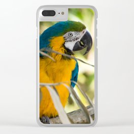 Parrots couple in the tree tops Clear iPhone Case