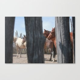 Stockade Cavvy Canvas Print