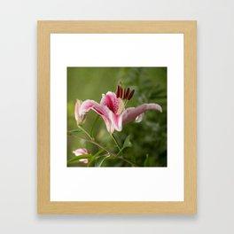 Pink Lily in The Autumn Garden #decor #society6 #buyart Framed Art Print