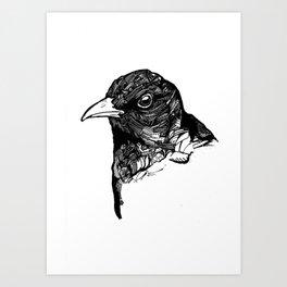 Ochrebeak Art Print