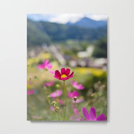 Pink Cosmos Flower in Japanese Alps mountain landscape at the historical villages of Shirakawa-go Metal Print
