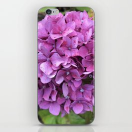 Pink speckled hydrangea iPhone Skin