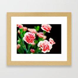 Carnation III Framed Art Print