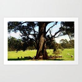 The Coolabah Tree Art Print