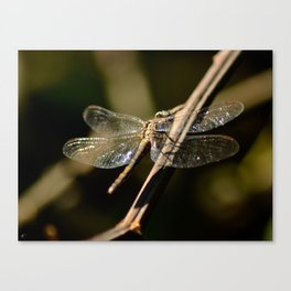Dragonfly 02 Canvas Print