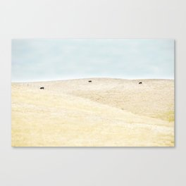 Sonoma Photography, Northern California Wine Country Grazing Cows Canvas Print
