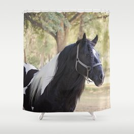 Stunning Gypsy Vanner in Color Shower Curtain