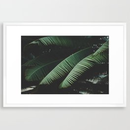 Night in the Tropics Framed Art Print