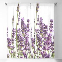 Purple Lavender #3 #decor #art #society6 Blackout Curtain