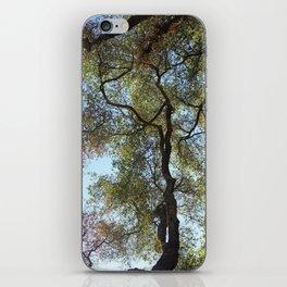 Dos Picos Ramona Oak Tree iPhone Skin
