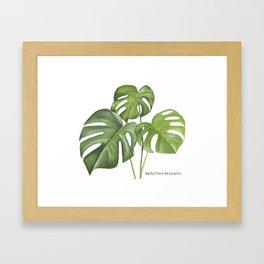 Monstera deliciosa 3 Leaves Framed Art Print