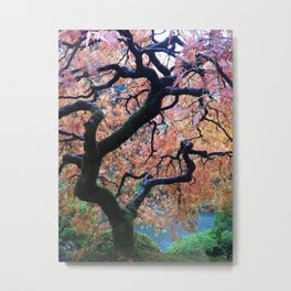 Japanese Maple in Fall Portland, Oregon Metal Print