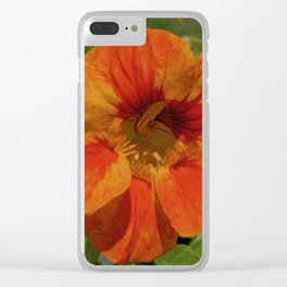 Glorious Nasturtium Clear iPhone Case