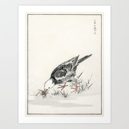 Brown-eared Bulbul illustration from Pictorial Monograph of Birds (1885) by Numata Kashu (1838-1901) Art Print