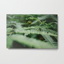 The Green Fern Metal Print