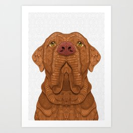 Bordeaux Mastiff Art Print