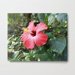 Pink Flower 2 Metal Print