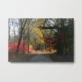 Autumn Paths Metal Print