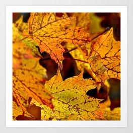 Golden leafs of fall Art Print