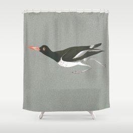Oystercatcher on the run Shower Curtain