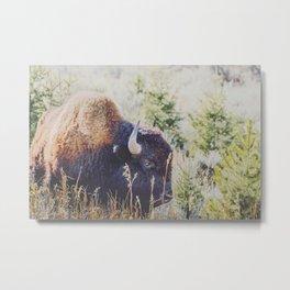 Yellowstone Grasses Metal Print