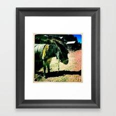 Donkey Days Framed Art Print