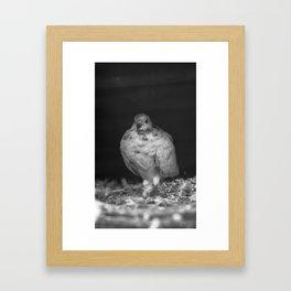 Catak Framed Art Print