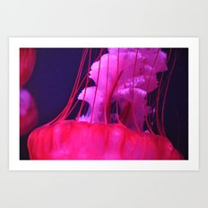 Pink Jellyfish Art Print
