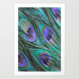 Peacock Fashion Art Print