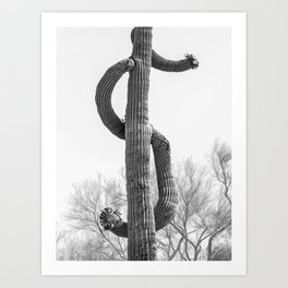 Dollar Saguaro, Black and White Desert Cactus Art by Murray Bolesta Art Print