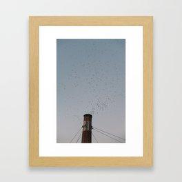 Chapman School Swifts in Portland, Oregon Framed Art Print