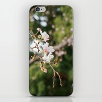 sakura iPhone & iPod Skins featuring sakura by artsimo