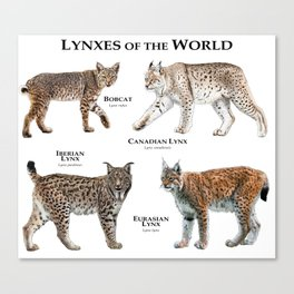 Lynxes of the World Canvas Print