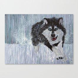 Husky Running Canvas Print