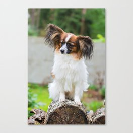 Outdoor portrait of a papillon purebreed dog Canvas Print